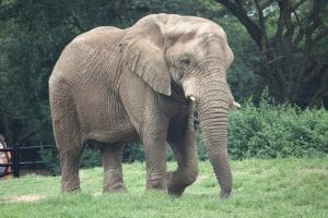 Seeing The Elephant: The Entrepreneur's Challenge of Integrating Advice<