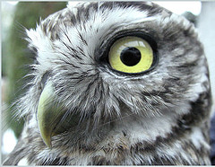 how do you think the Owl got so wise? By asking stupid questions!