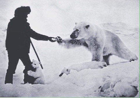 Shooting a bear doesn't make you a badass. Feeding a polar bear while her cub humps your leg makes you a badass.
