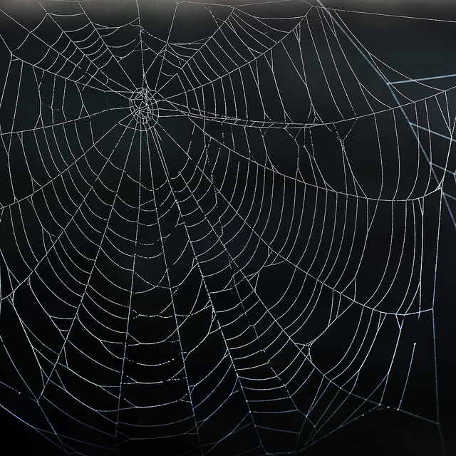 Spiderweb: No Safety in Numbers