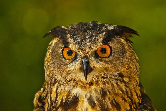 The Owl gets wise by paying dues