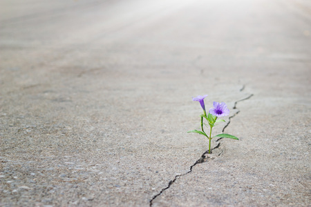 Flower Sidewalk: Start Where You Are