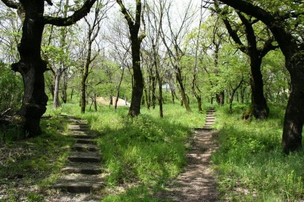 Two Paths in the Forest: a metaphor for Making Business Decisions in Uncertain Times